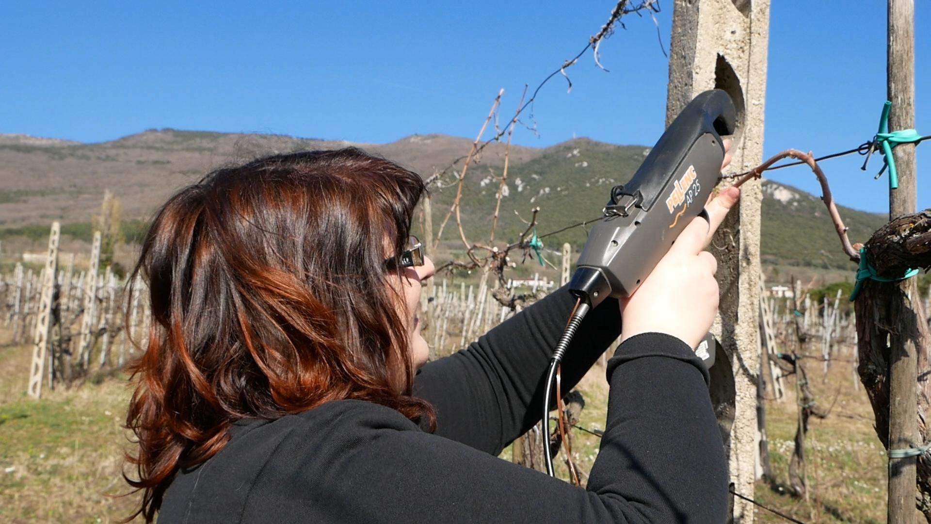 Esperienza sensoriale Assisi Tili Vini - Mastro potatore per un giorno 1