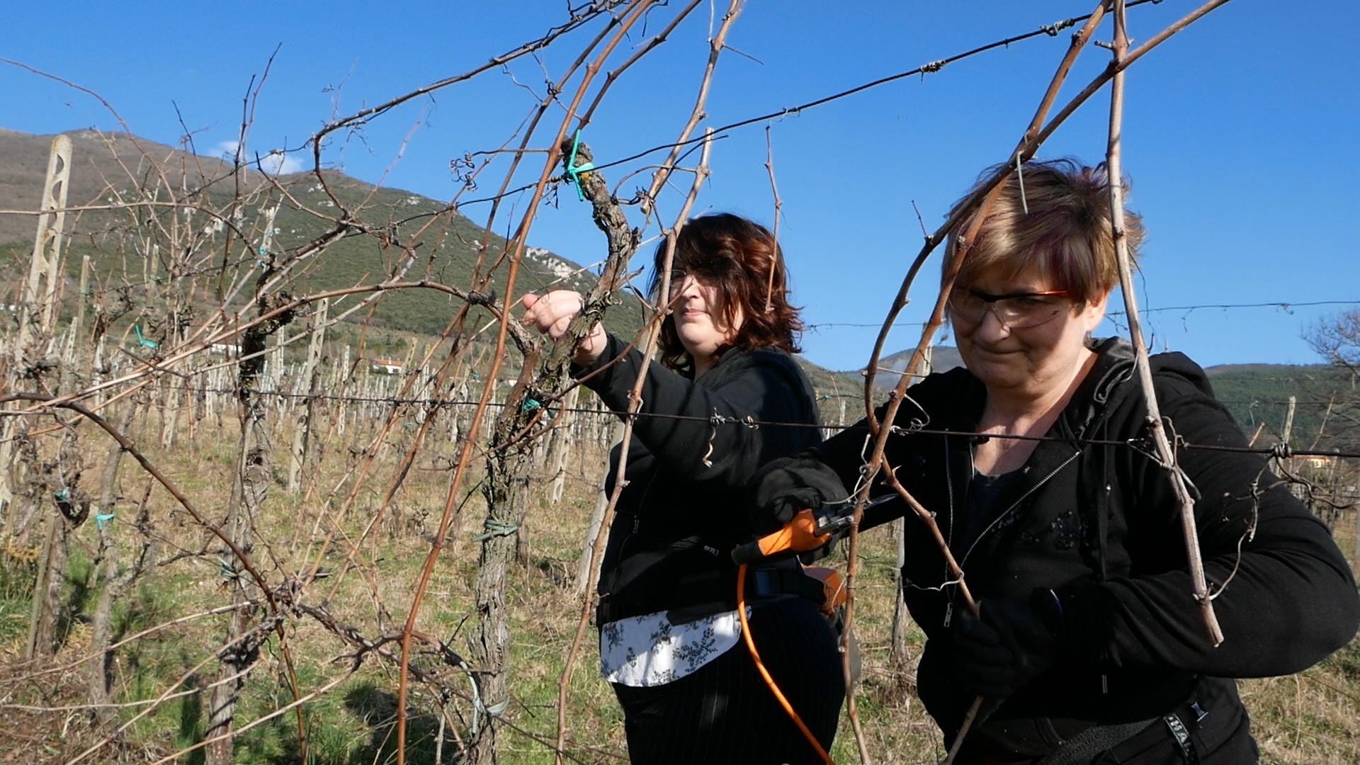 Esperienza sensoriale Assisi Tili Vini - Mastro potatore per un giorno 10