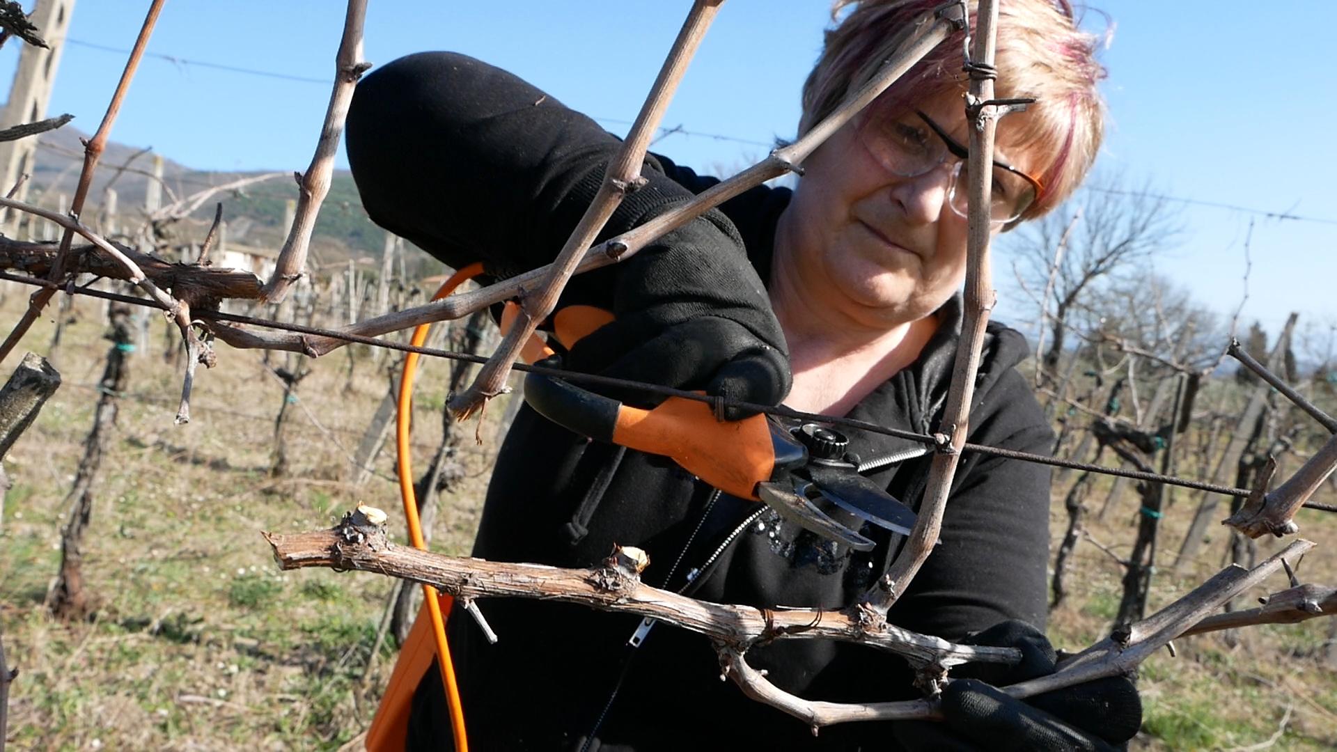 Esperienza sensoriale Assisi Tili Vini - Mastro potatore per un giorno 4