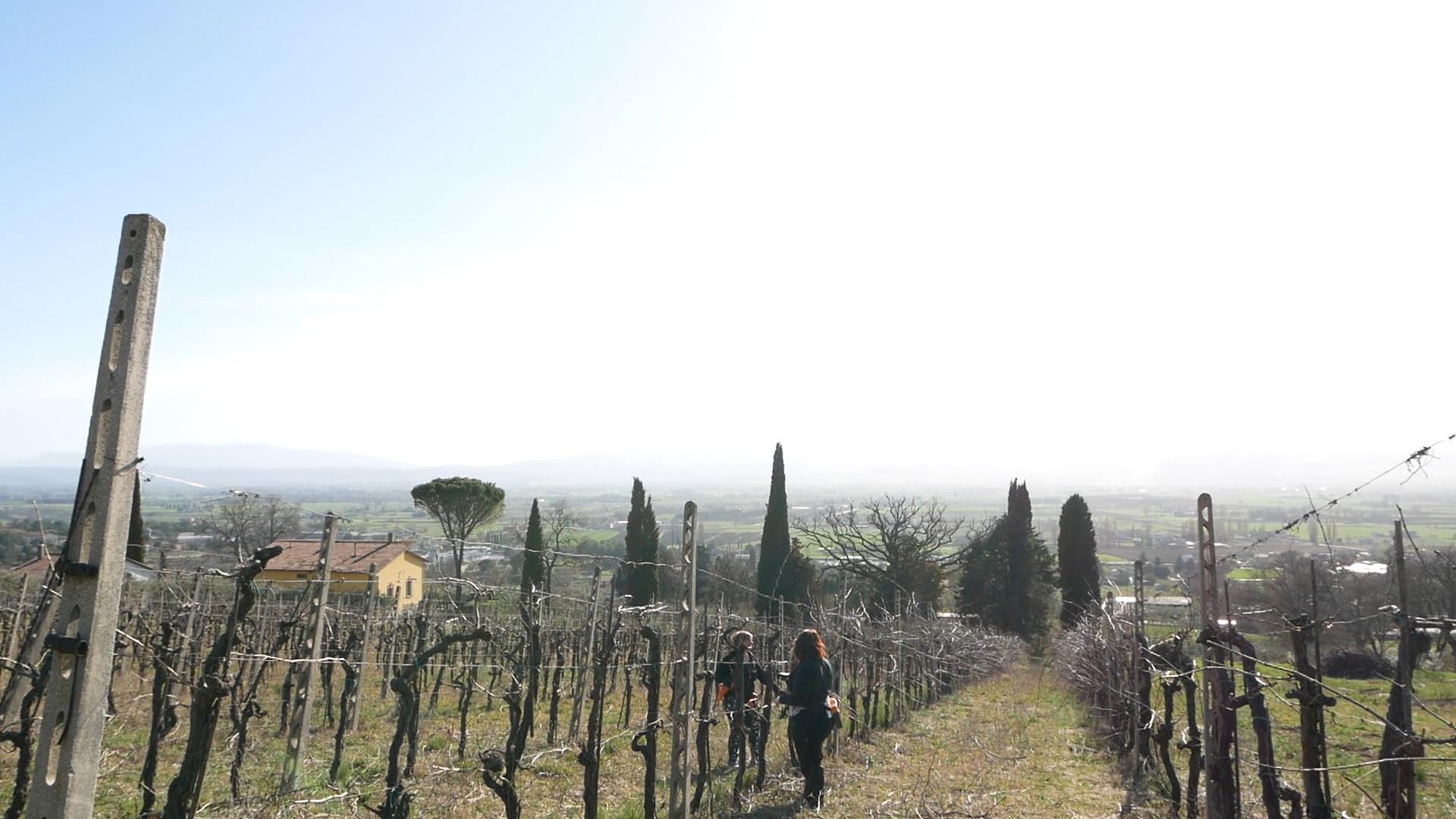 Esperienza sensoriale Assisi Tili Vini - Mastro potatore per un giorno 5