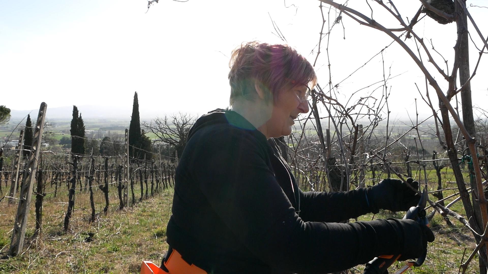 Esperienza sensoriale Assisi Tili Vini - Mastro potatore per un giorno 6