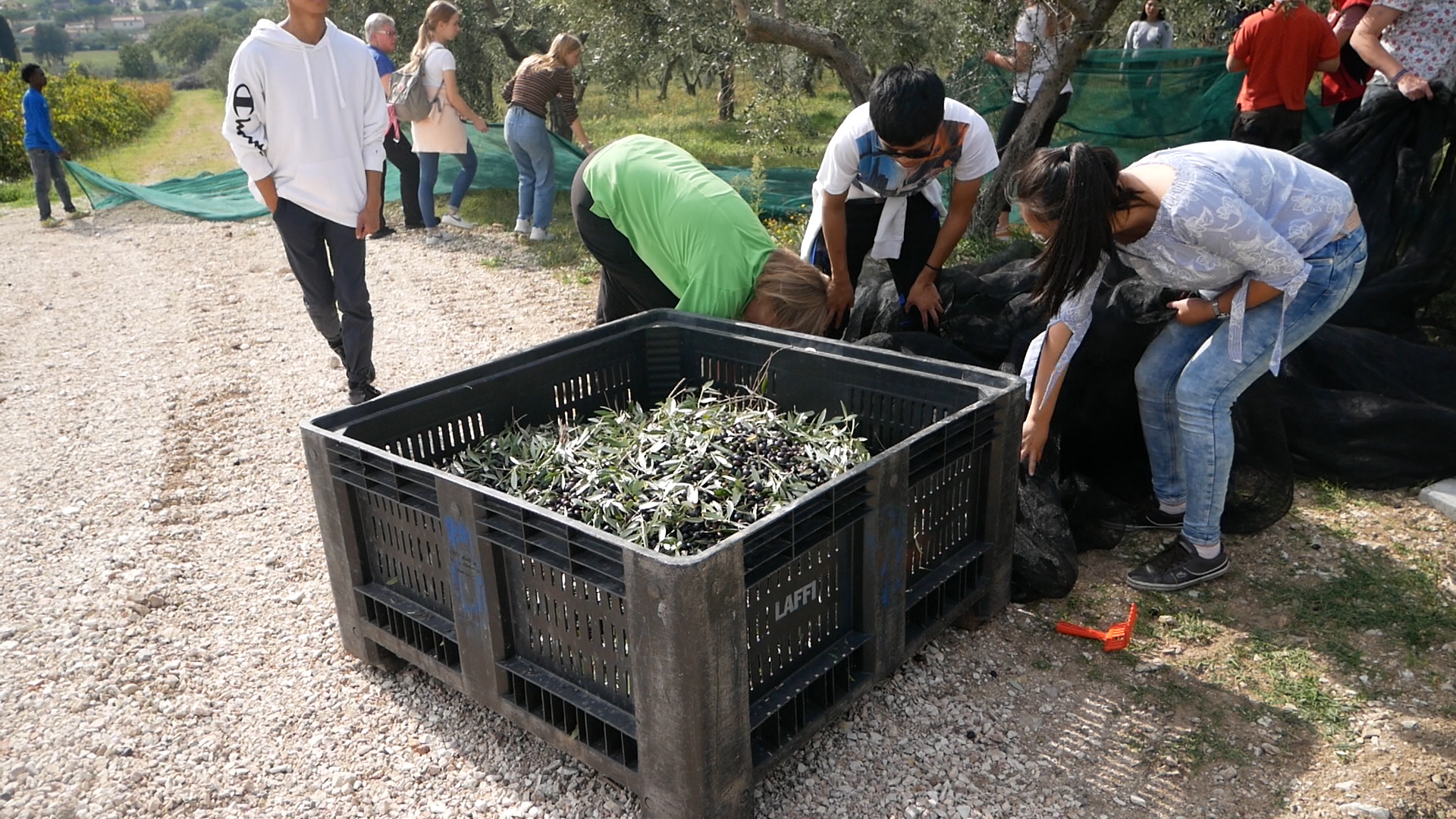 Esperienza sensoriale Assisi Tili Vini - Raccogliamo le olive insieme 10
