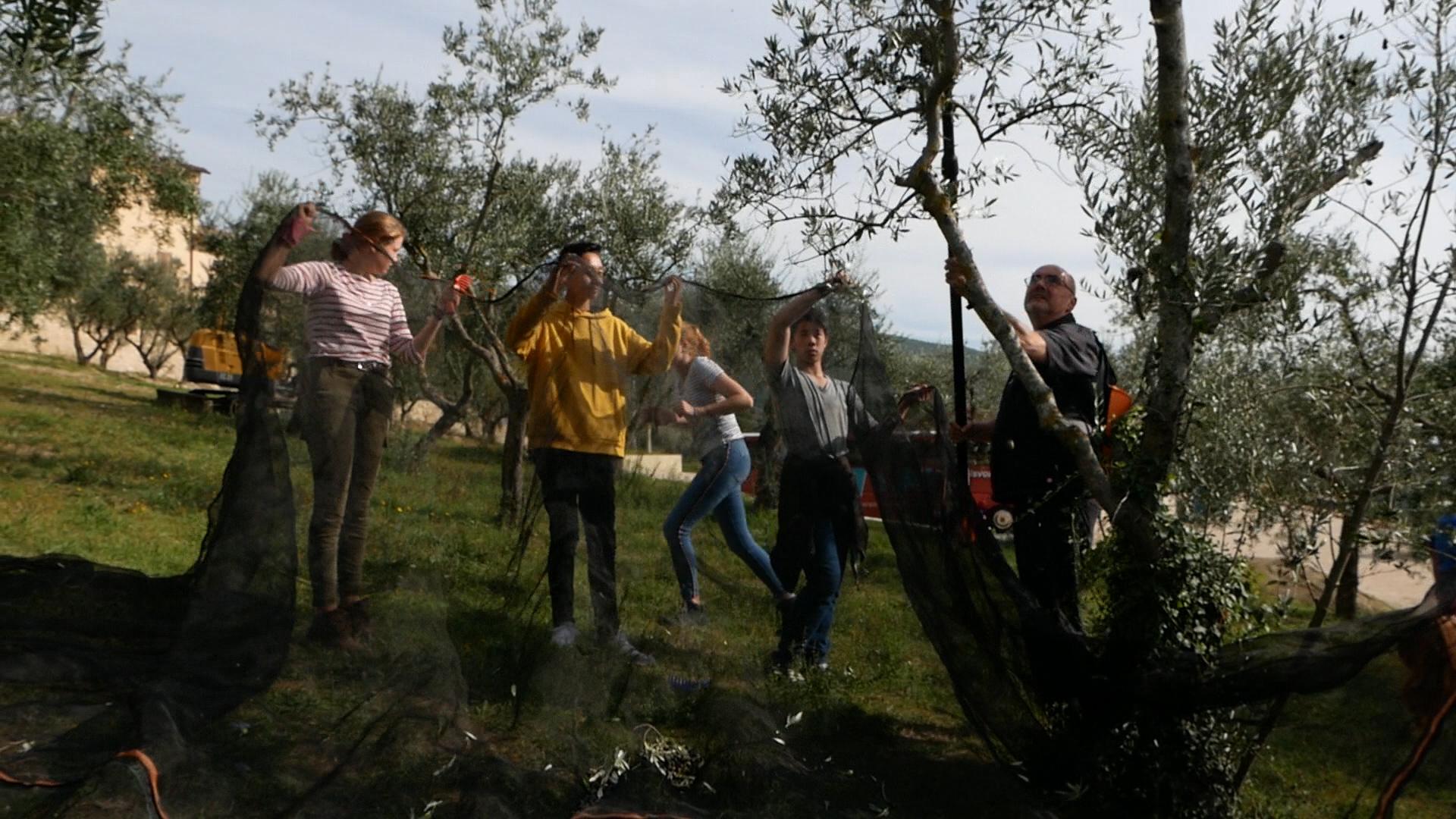 Esperienza sensoriale Assisi Tili Vini - Raccogliamo le olive insieme 2