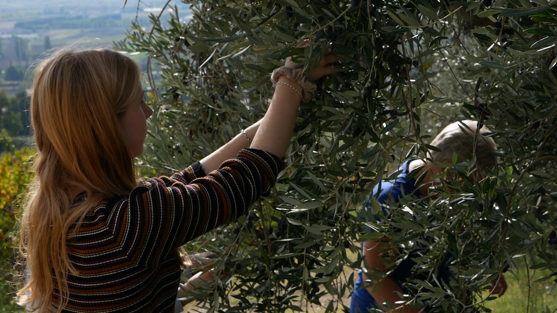 Esperienza sensoriale Assisi Tili Vini - Raccogliamo le olive insieme 4