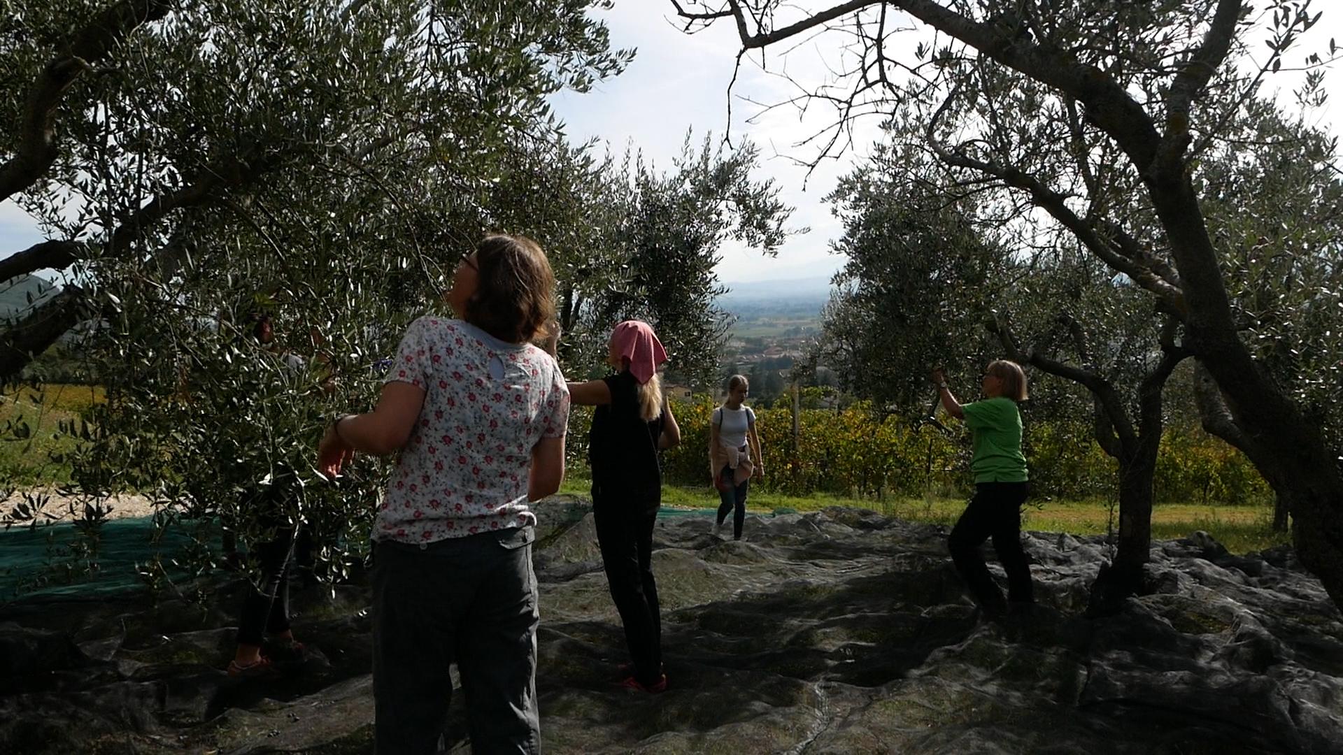 Esperienza sensoriale Assisi Tili Vini - Raccogliamo le olive insieme 5