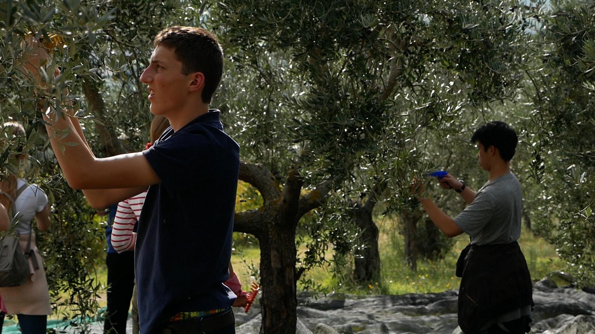 Esperienza sensoriale Assisi Tili Vini - Raccogliamo le olive insieme 6