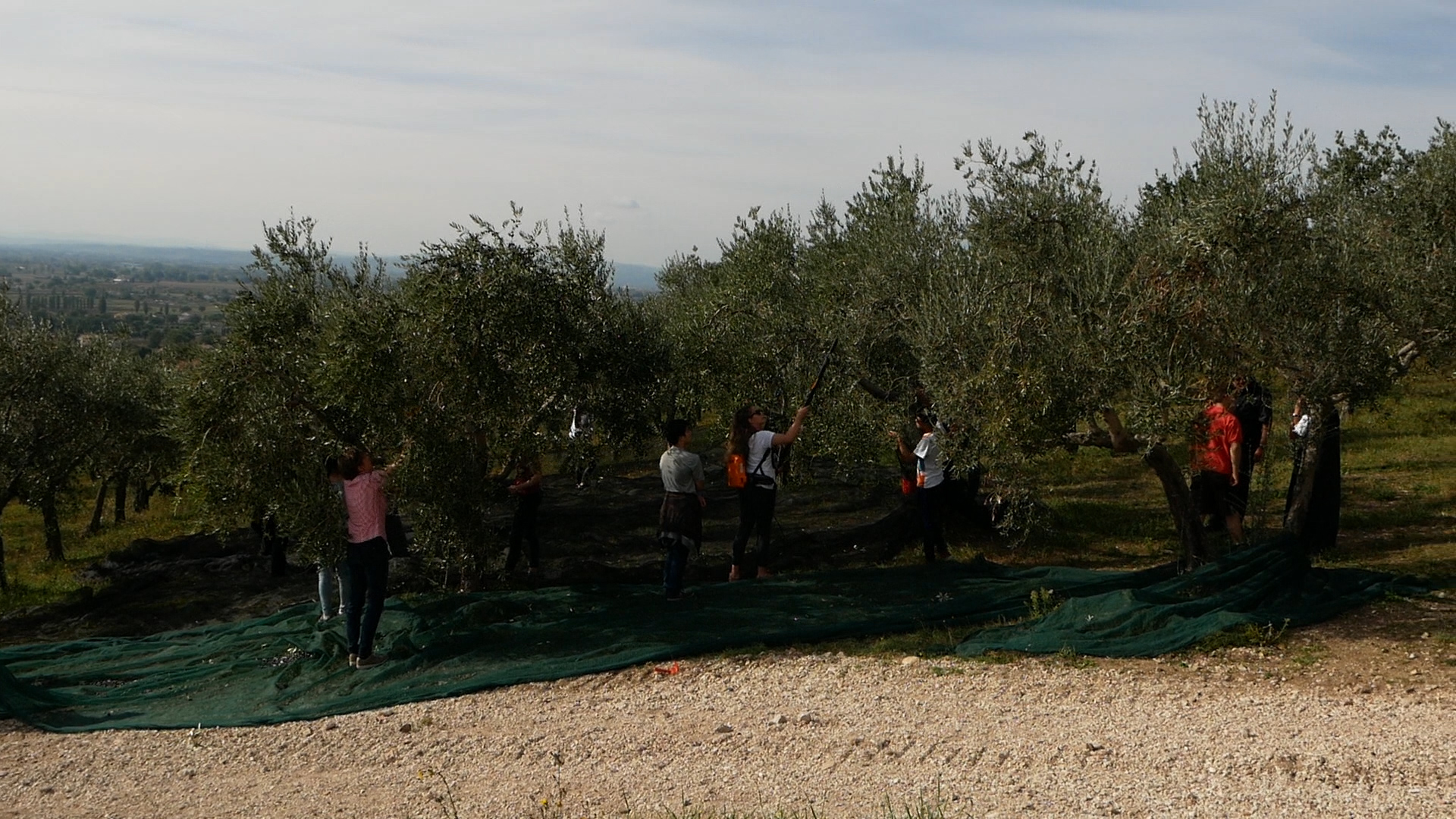 Esperienza sensoriale Assisi Tili Vini - Raccogliamo le olive insieme 9