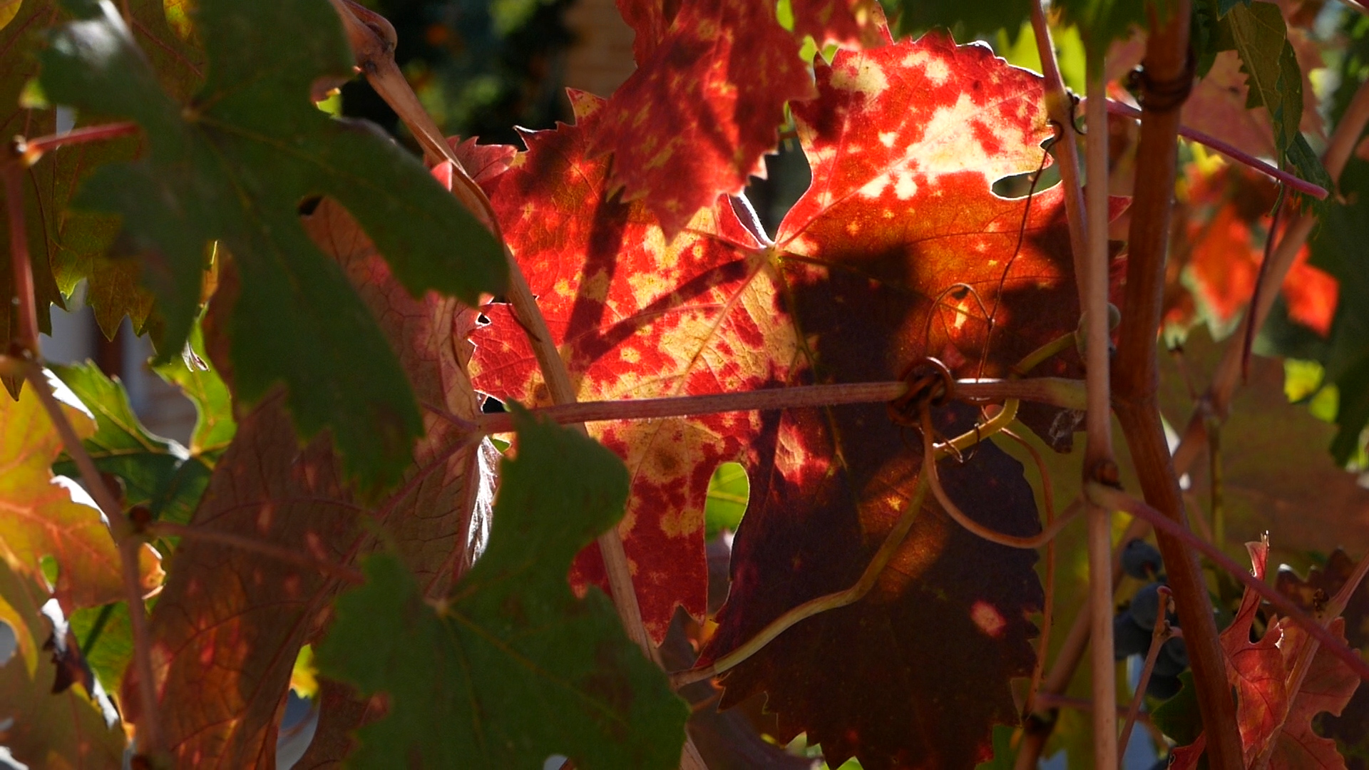 Esperienza sensoriale Assisi Tili Vini - Vendemmiamo insieme 1