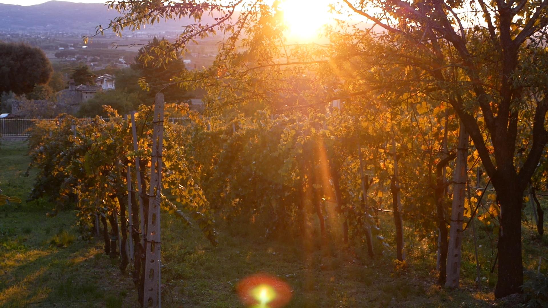 Esperienza sensoriale Assisi Tili Vini - Vendemmiamo insieme 10