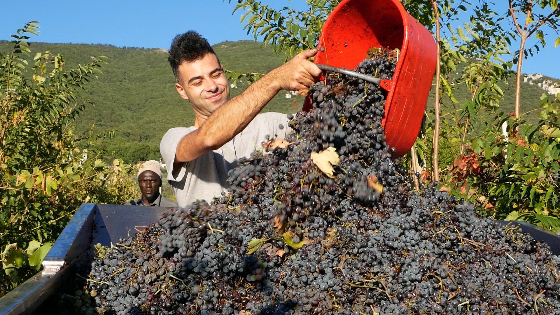 Esperienza sensoriale Assisi Tili Vini - Vendemmiamo insieme 4