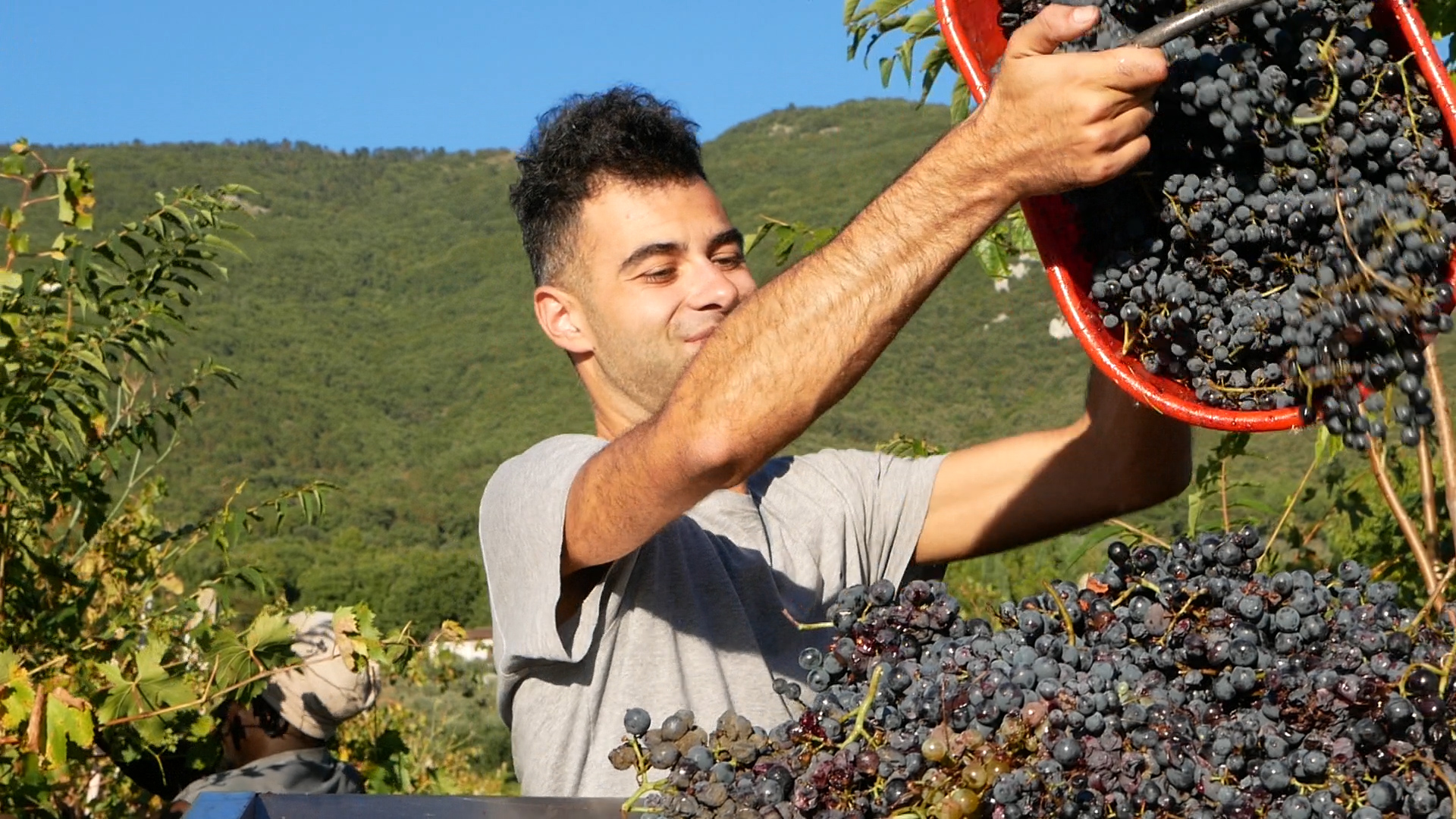 Esperienza sensoriale Assisi Tili Vini - Vendemmiamo insieme 5