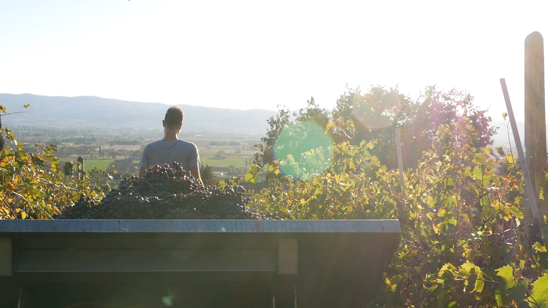 Esperienza sensoriale Assisi Tili Vini - Vendemmiamo insieme 6